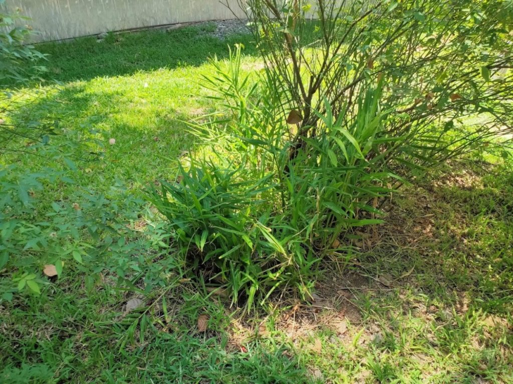 araniホームステイ庭の植物1