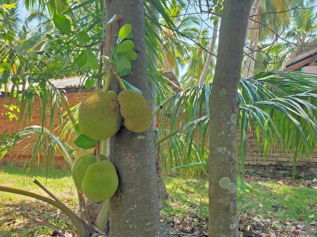 araniホームステイ庭の植物4