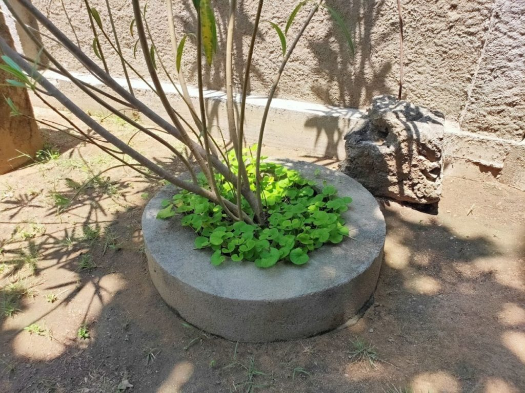 araniホームステイ庭の植物6