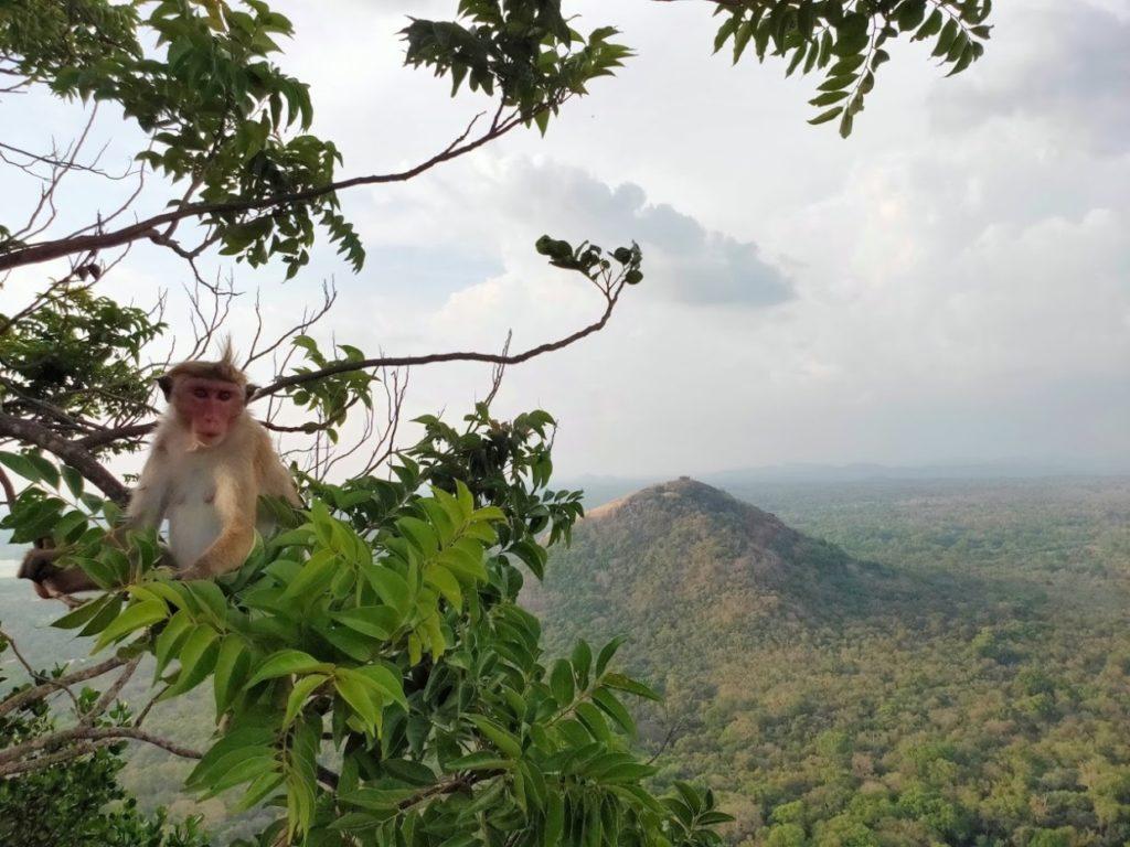 シギリヤロックからみるピドゥランガラロックと猿