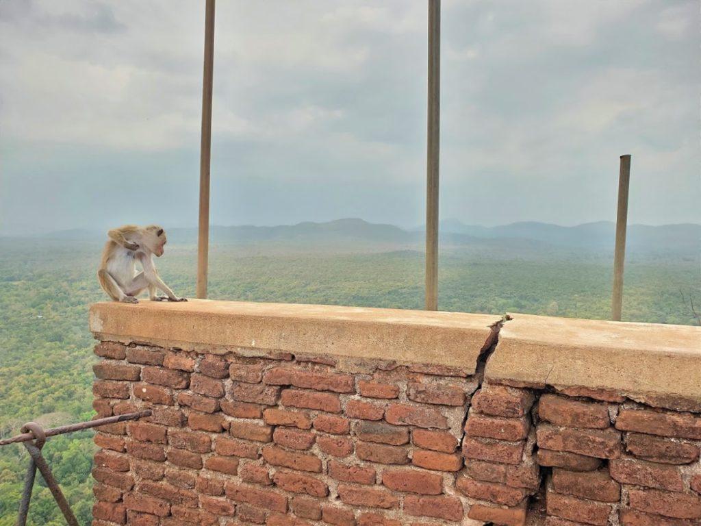 シギリヤロック頂上の猿