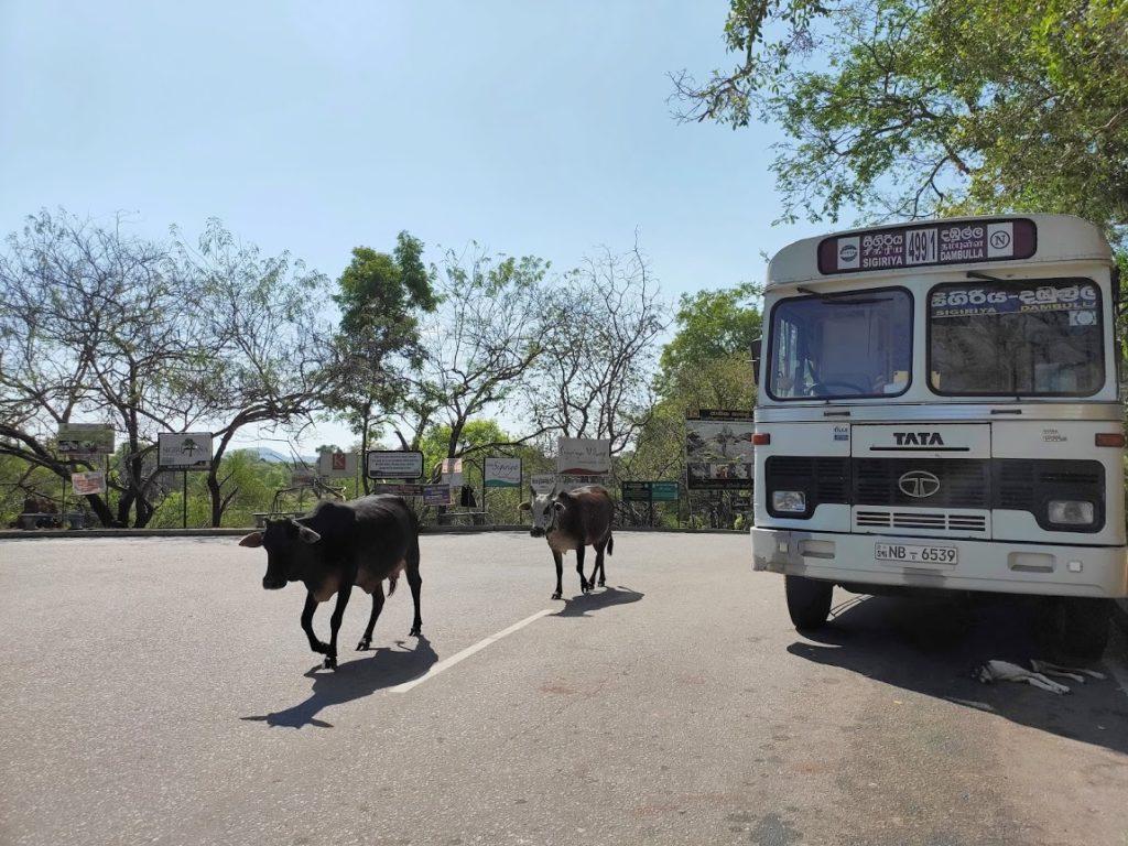 シギリヤからイナマルワまでのバス