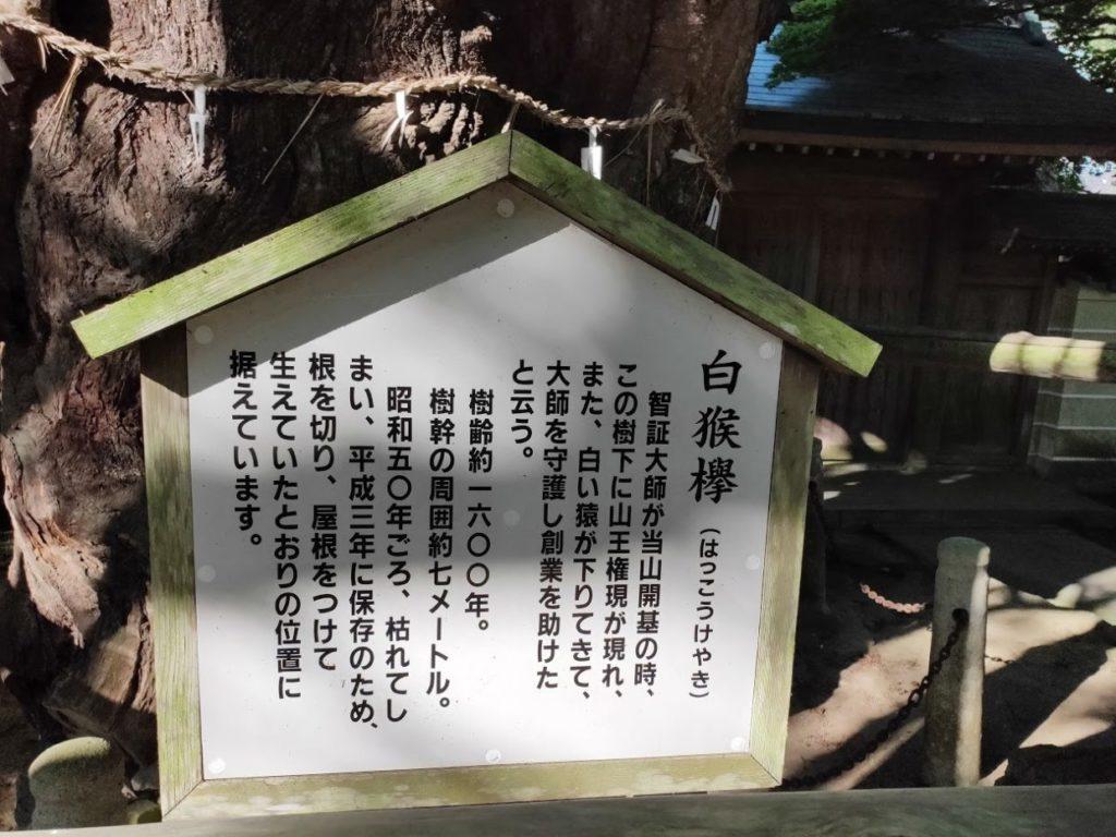 82番根香寺のはっこうけやきの説明看板