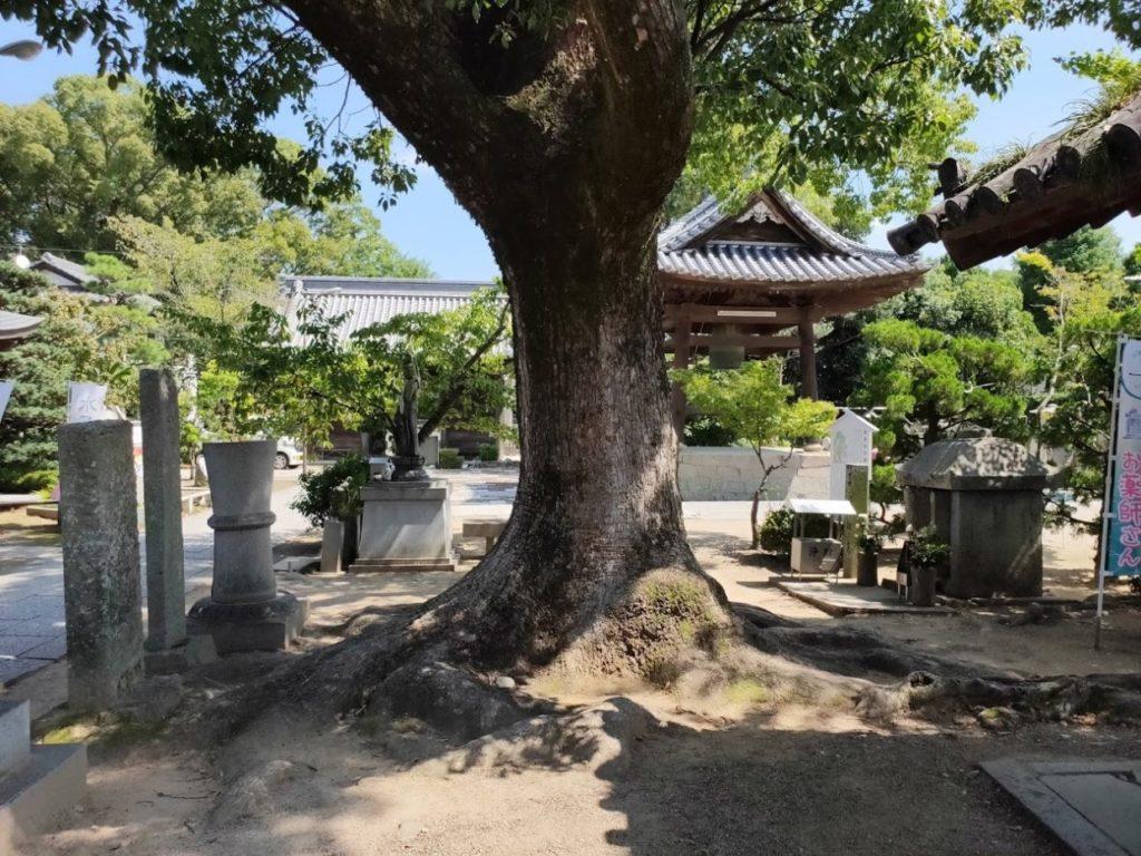 83番一宮寺の古い巨木
