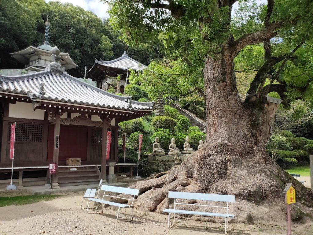 68番神恵院69番観音寺の巨木