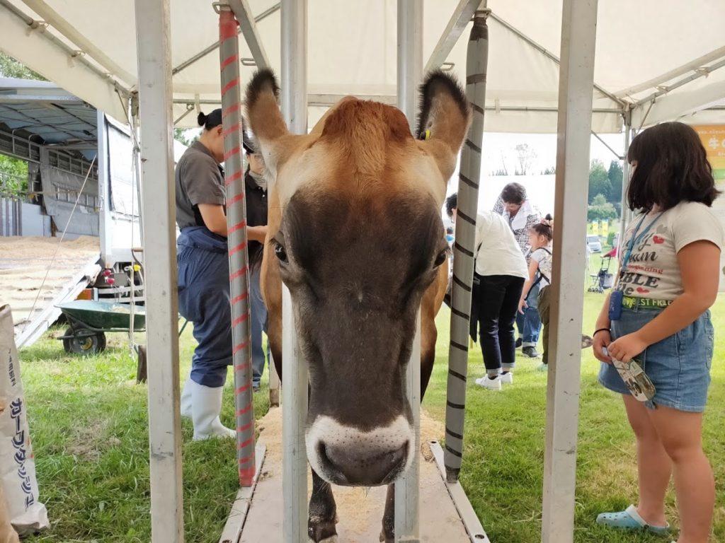 ヨーグルトサミットの牛