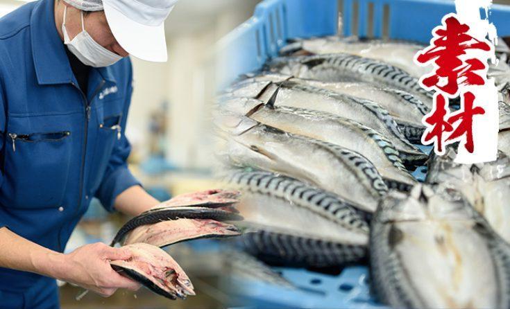 ふるさと納税日置市の魚素材