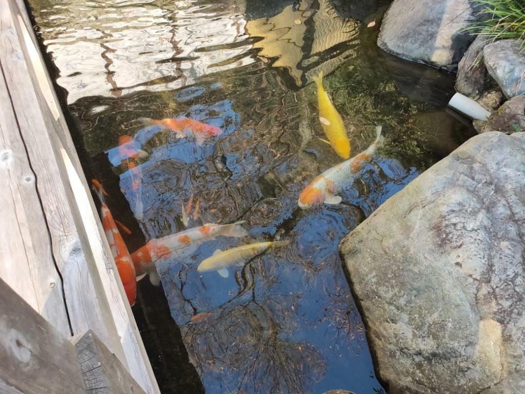 50番繁多寺の鯉と池