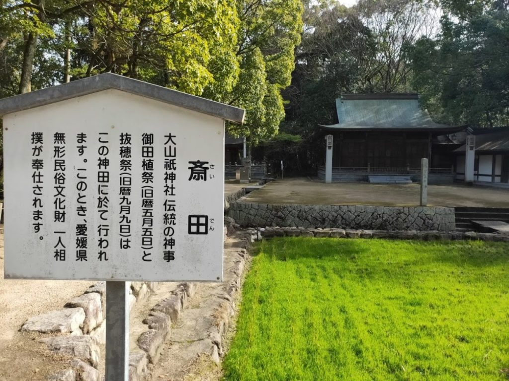 大山祇神社の斎田