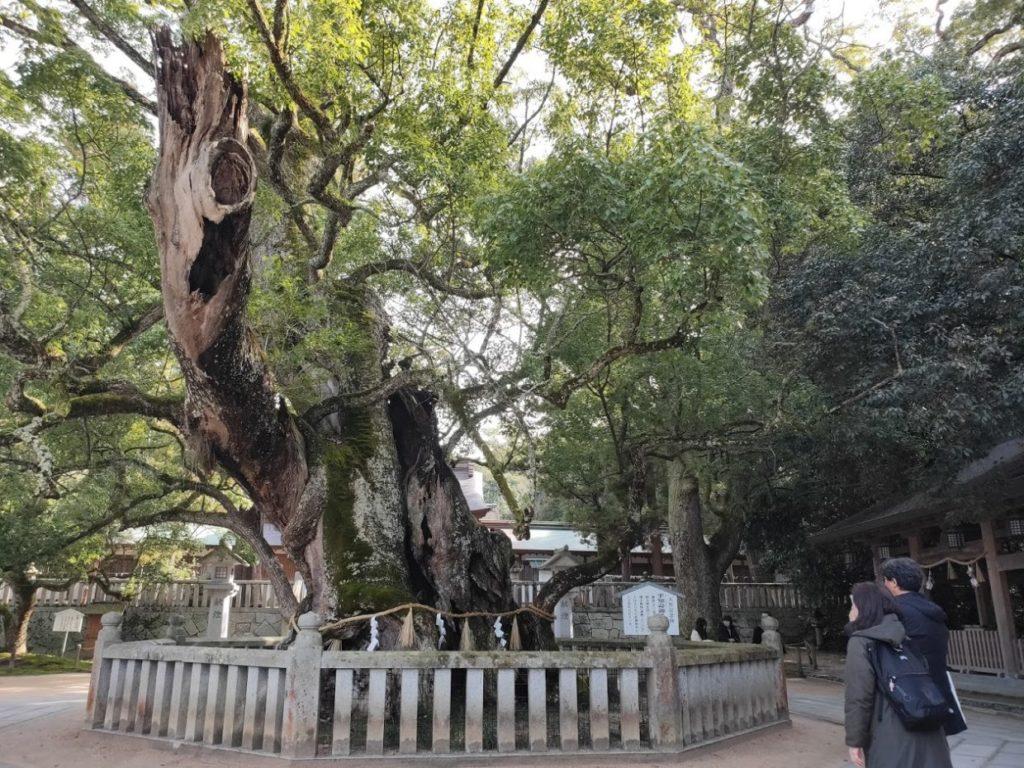 大山祇神社の古い巨木