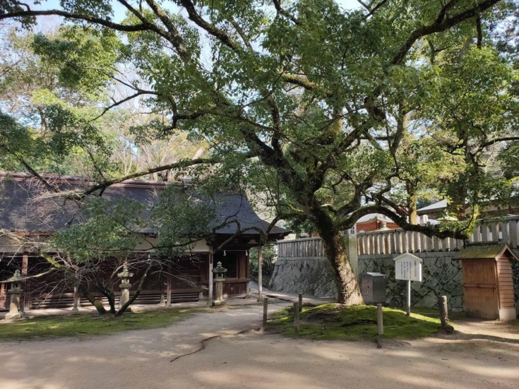 大山祇神社の伊藤博文記念樹