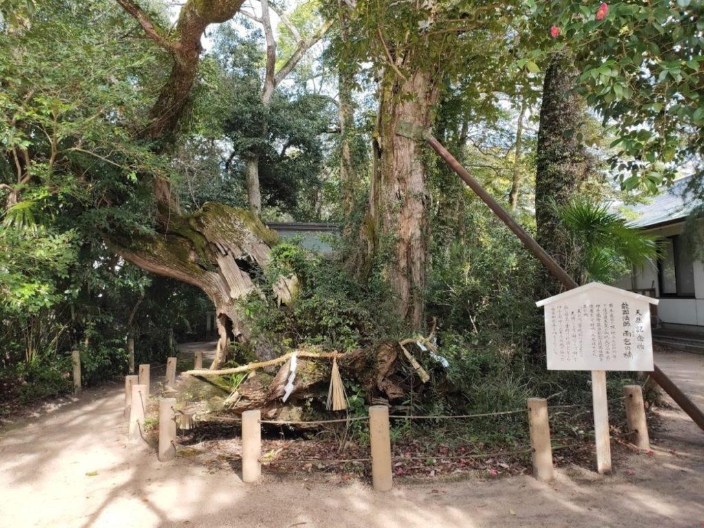 大山祇神社の雨乞いの木