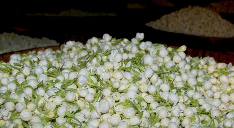 ジャスミン茶の花