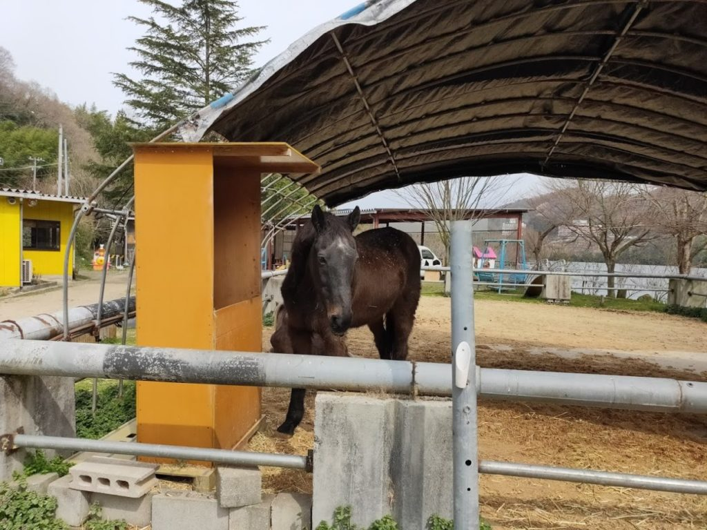 塩江ふじかわ牧場の馬1