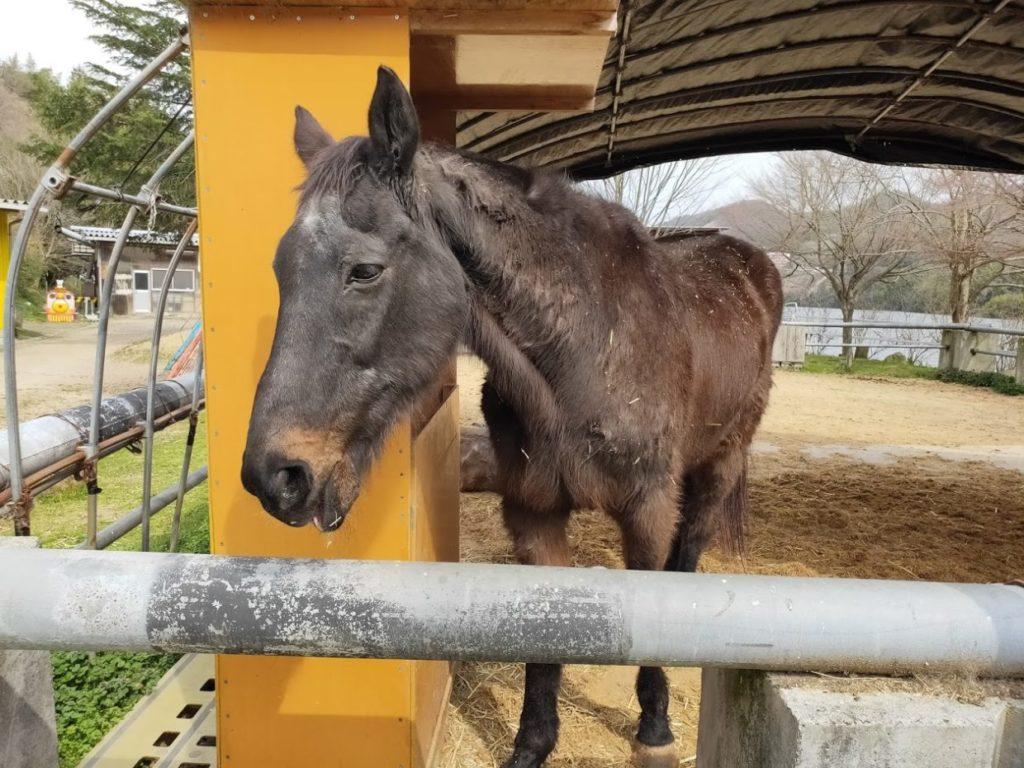 塩江ふじかわ牧場の馬2