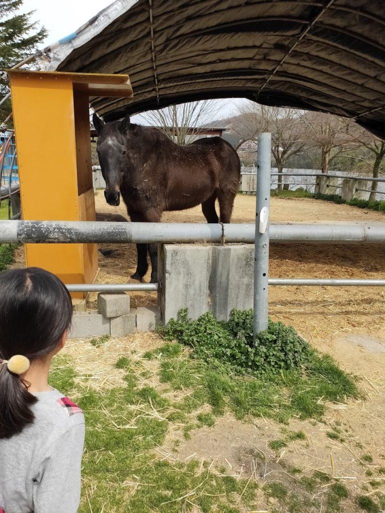 塩江ふじかわ牧場の馬と子ども