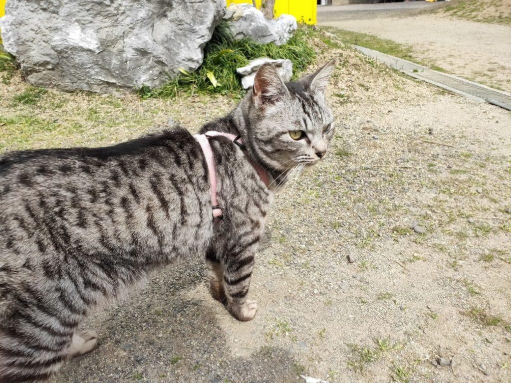 塩江ふじかわ牧場の猫