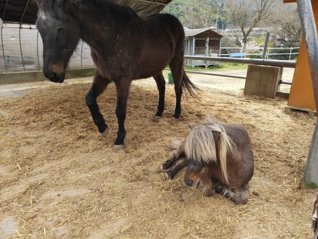 塩江ふじかわ牧場の馬3