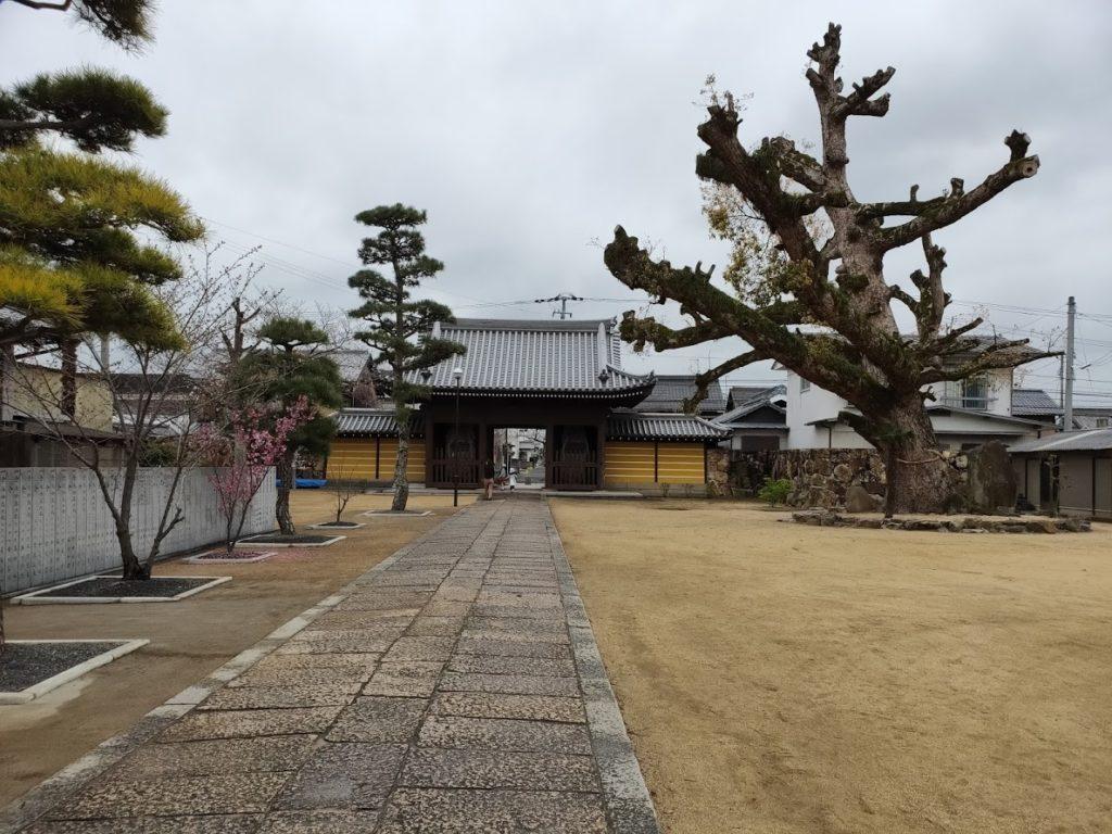 76番金倉寺の庭と大木