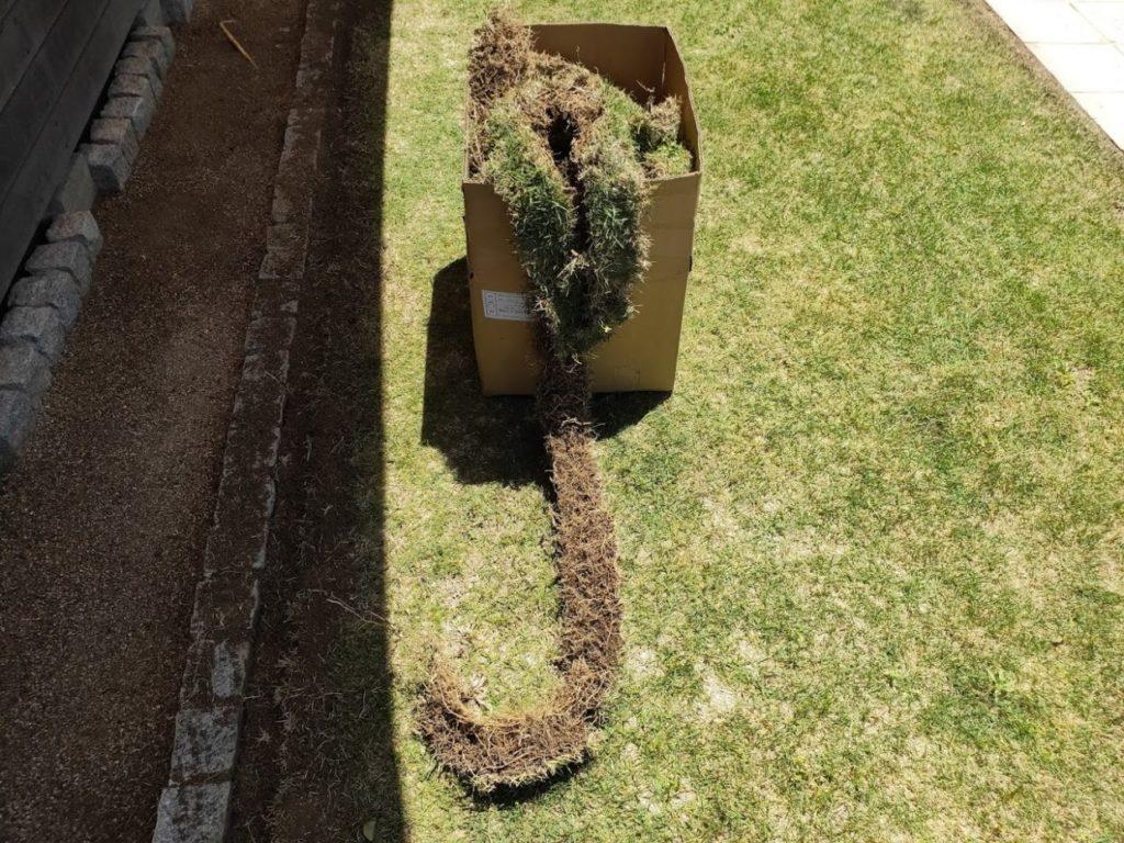 庭の芝生を狩った後のゴミ2