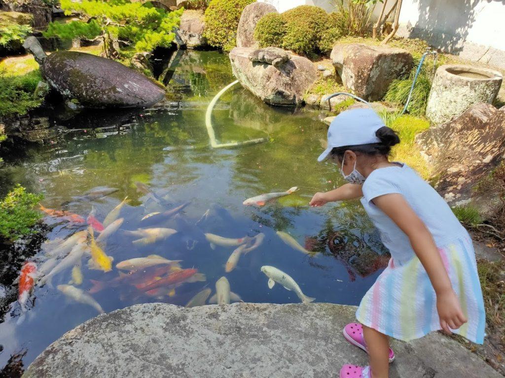 39番延光寺の鯉と子ども
