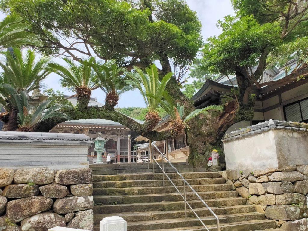 38番金剛福寺の植物
